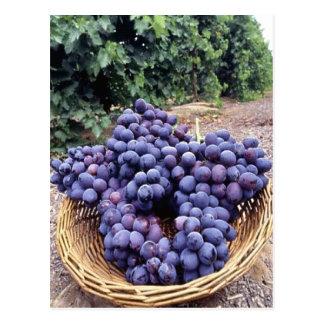 Uvas de la púrpura real postal