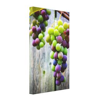 Uvas de maduración impresión en lona