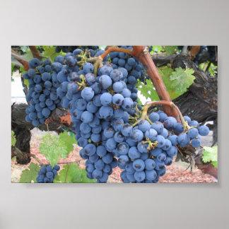 Uvas de Napa Valley Impresiones