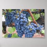 Uvas de Napa Valley Póster