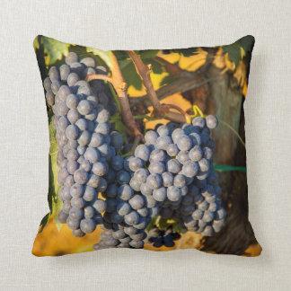 Uvas de Sangiovese en un viñedo Cojines