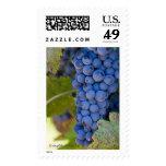 Uvas de Sonoma, diversas tarifas - 20 sellos