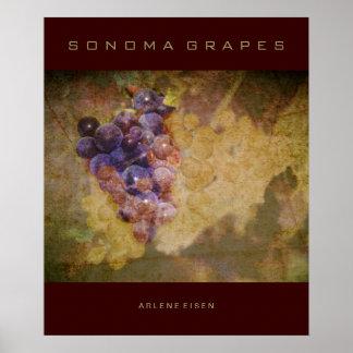Uvas de Sonoma en vid Póster