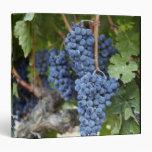 Uvas de vino rojo en la vid