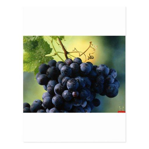 Uvas de vino tarjeta postal