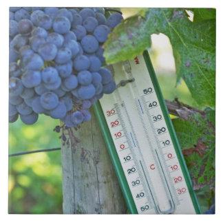 Uvas del Merlot en el la Figeac grave, a del casti Azulejo Cuadrado Grande