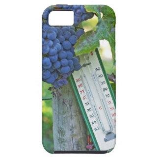 Uvas del Merlot en el la Figeac grave, a del iPhone 5 Funda