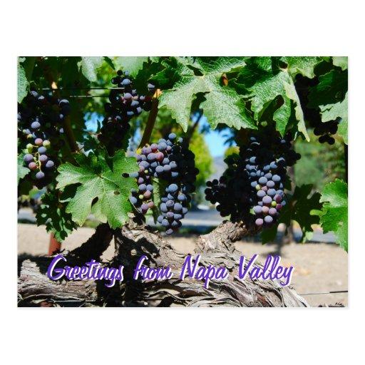 Uvas del viñedo de Napa en vid Tarjetas Postales