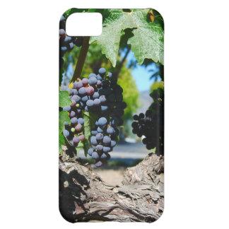 Uvas del viñedo en las vides de Napa