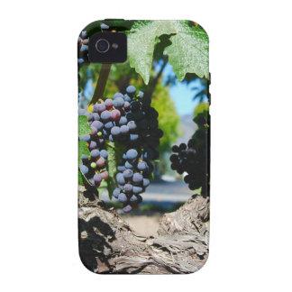 Uvas del viñedo en las vides de Napa iPhone 4 Funda