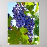 Uvas del viñedo impresiones