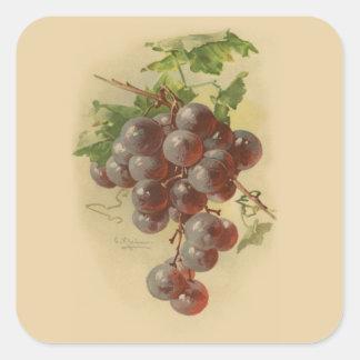 Uvas del vintage pegatina cuadrada