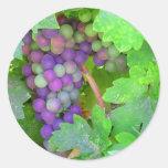 Uvas en la vid etiqueta redonda