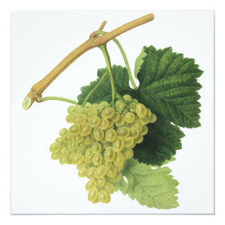 """Uvas en la vid, fruta del vino blanco de la comida invitación 5.25"""" x 5.25"""""""