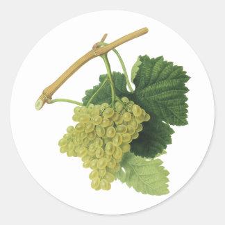 Uvas en la vid, fruta del vino blanco de la comida pegatina redonda