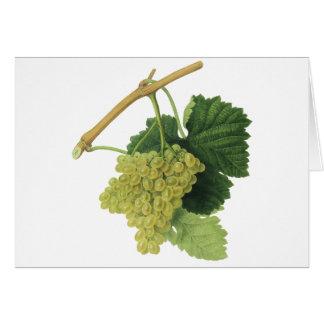 Uvas en la vid, fruta del vino blanco de la comida tarjeta de felicitación