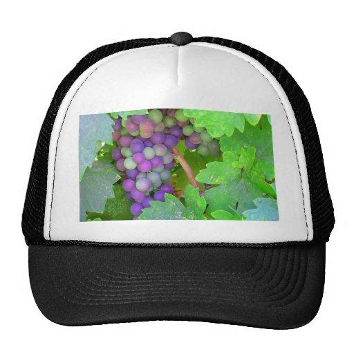 Uvas en la vid gorras