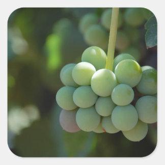 Uvas en la vid pegatina cuadrada