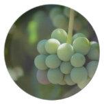 Uvas en la vid plato