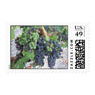 Uvas en la vid, viñedo de la colina de Aron Timbre Postal