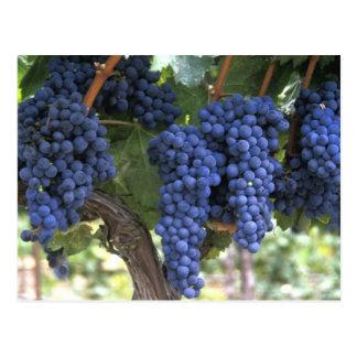 Uvas listas para la cosecha postal