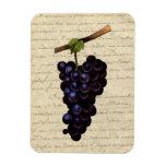 Uvas negras del vintage imán