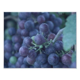 Uvas púrpuras fotografía