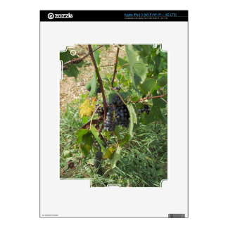 Uvas rojas en un viñedo iPad 3 skin