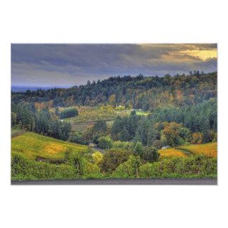 Uvas sobre un valle fotografia