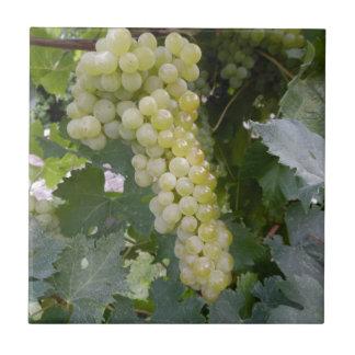 Uvas verdes azulejo cuadrado pequeño