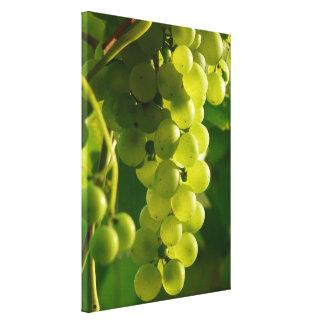 Uvas verdes en vid impresion en lona