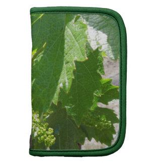 Uvas verdes jovenes en la vid en primavera organizadores