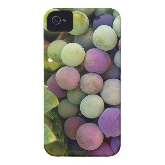 Uvas y vino frescos iPhone 4 protectores