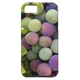 Uvas y vino frescos iPhone 5 carcasas