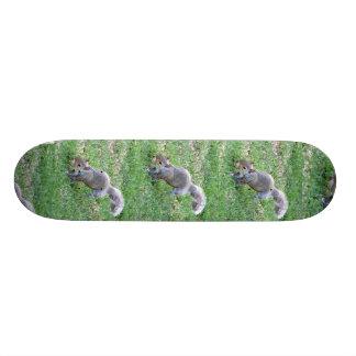 V5- Squirrelly Skateboard