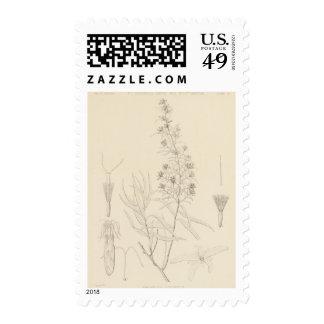 V longifolia del Brickellia Timbres Postales