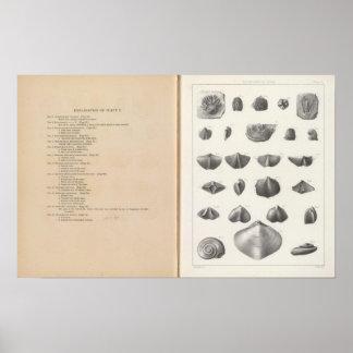 V Subcarboniferous period Print
