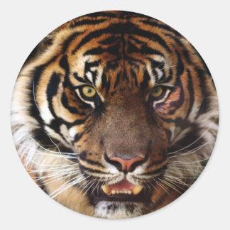 Va el tigre salvaje pegatina redonda