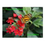 ¡VA EL VERDE! Colores de la mariposa de la primave Postal