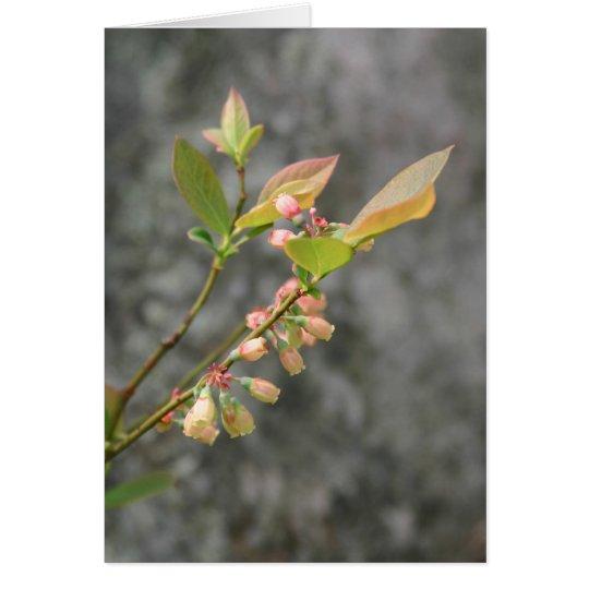 VA Wildflowers Notecard #5, Lowbush Blueberry