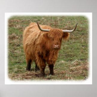Vaca 9Y316D-053 de la montaña Póster