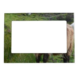 Vaca adorable de la montaña marcos magneticos