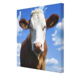 Vaca bávara contra el cielo azul impresión en lienzo