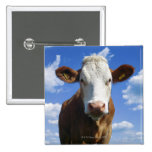 Vaca bávara contra el cielo azul pin cuadrado