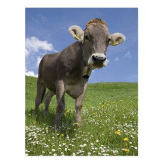 vaca bávara postal