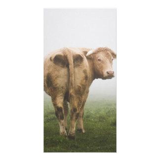 Vaca blanca Bull que mira detrás en un campo de Tarjetas Personales Con Fotos