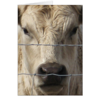 Vaca blanca - cambio de dirección occidental felicitación