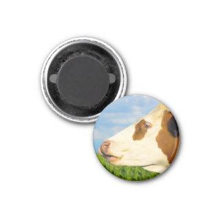 Vaca blanca de Brown que mira todo derecho. Imán De Frigorifico
