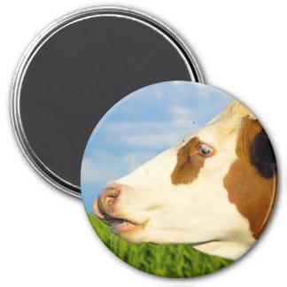 Vaca blanca de Brown que mira todo derecho. Iman De Frigorífico