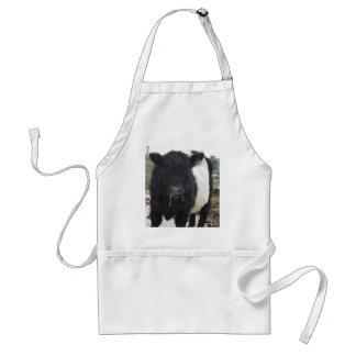 Vaca ceñida de Galloway que come el heno Delantal